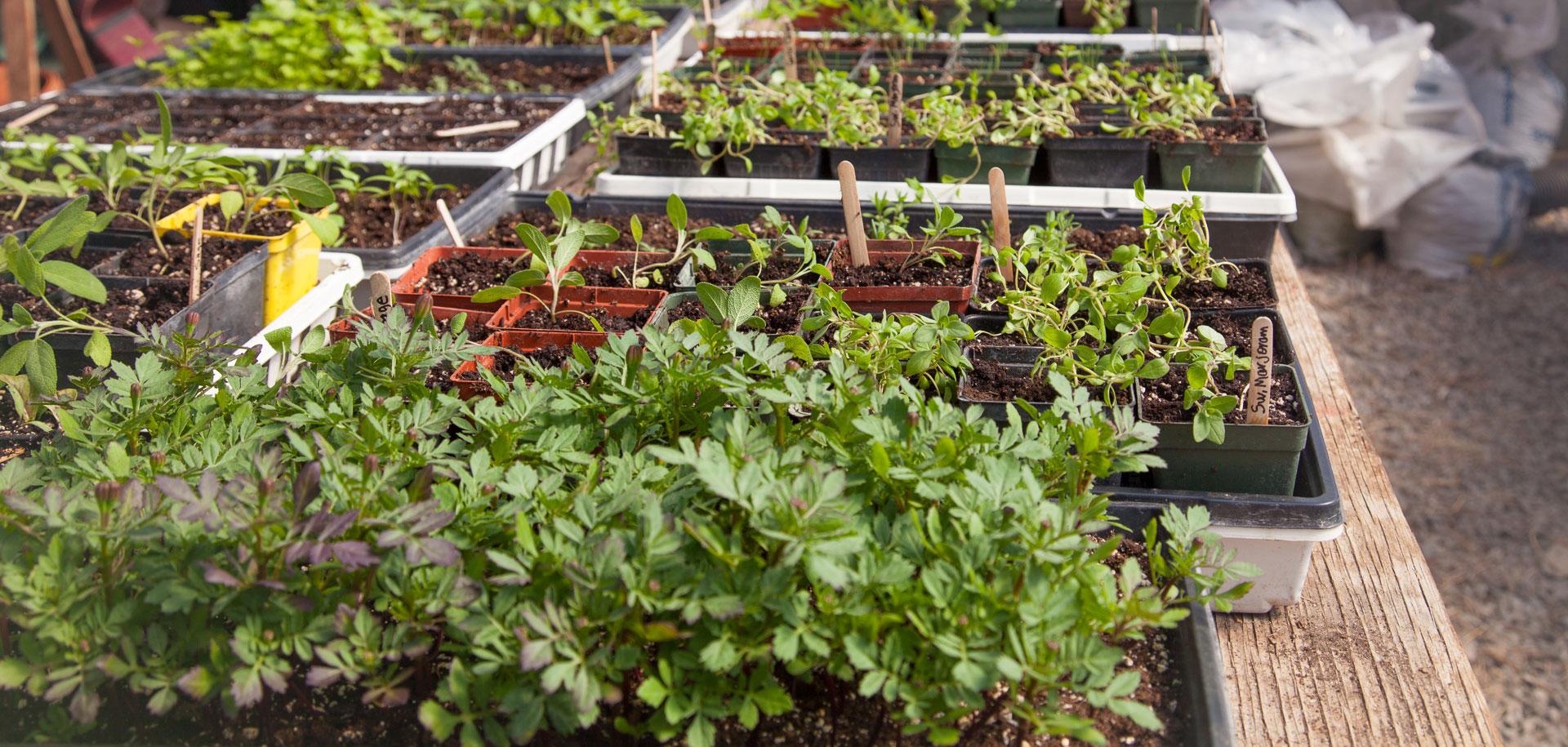 Art Farm Green House Plants